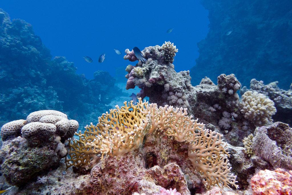 Arrecife de coral - Tulum