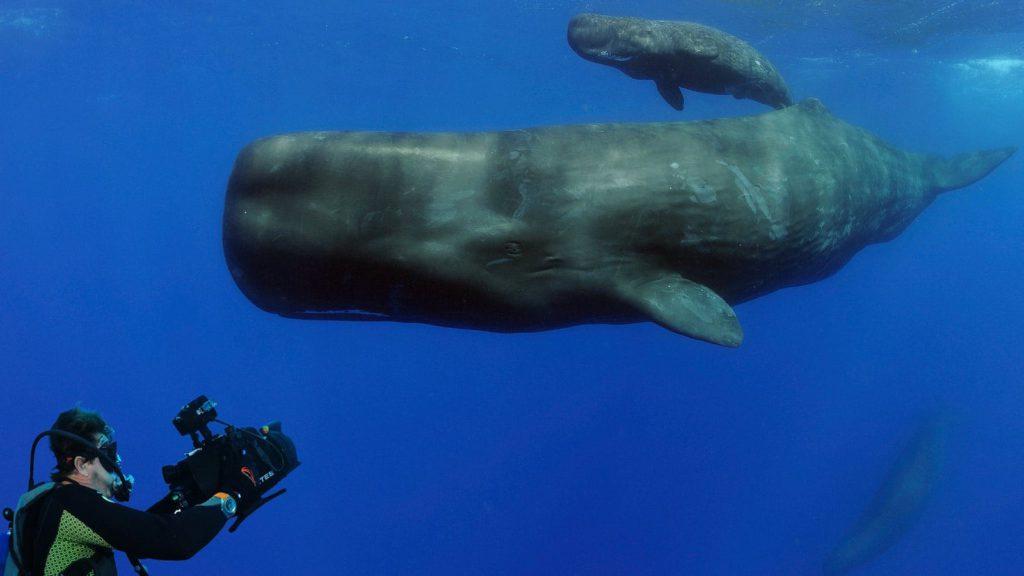 omega planet ocean 2