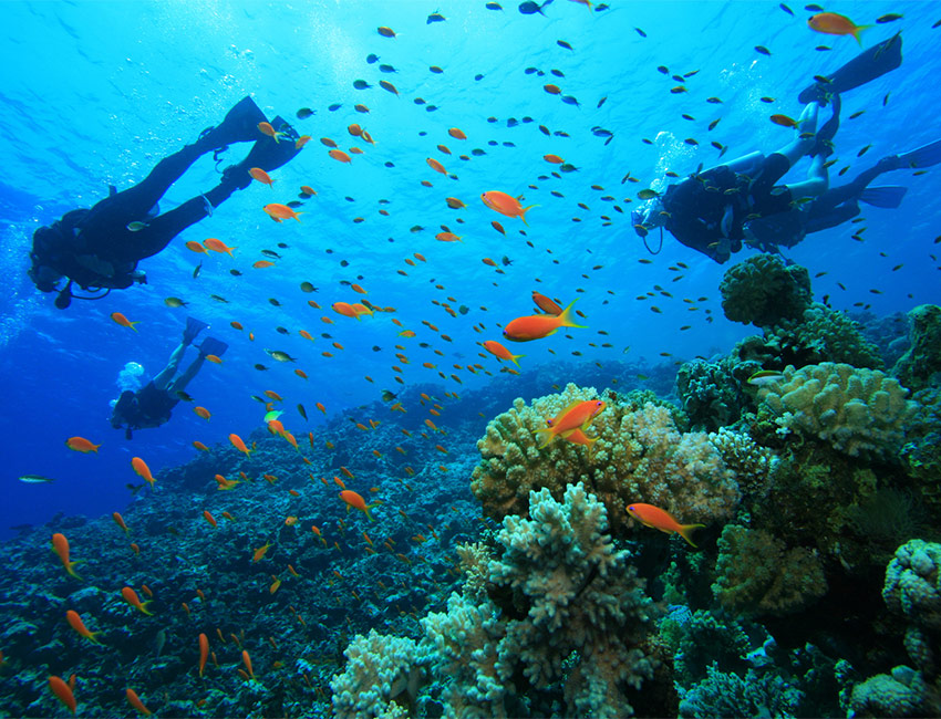 aprende a bucear con jaeger lecoultre|jaeger lecoultre nos ensena a cuidar los mares