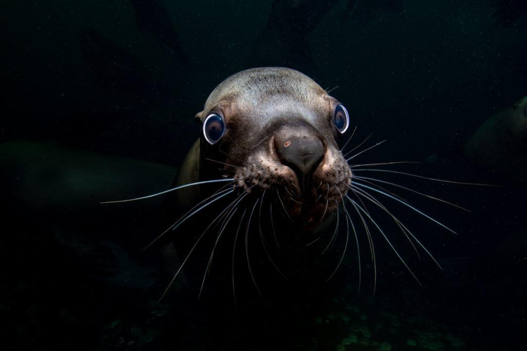 Blancpain celebra lo mejor de la fotografía submarina, crea Female Fifty Fathoms Award